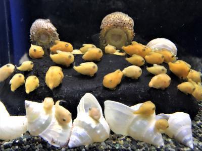 冬の鎌倉・湘南散歩 海を見下ろすテラスでイタリアン&これぞワビサビ/珊瑚礁のカレーのあとは新江ノ水