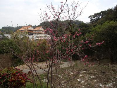 2/7( 初三)台南麻豆遠征。2/9(初五)台湾雷蔵寺法會後北上帰還。
