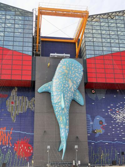 大阪-8 海遊館a  環太平洋の海を再現 10時入場 ☆アクアゲートを抜け8階へ