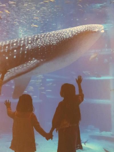 大阪-9 海遊館b ジンベエザメ  魚類で最大の種 ☆悠然と泳ぐ二頭を追跡して