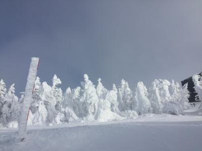 海外旅行だけでなく国内スキーも行くよ♪ 2019年2月・志賀高原の巻