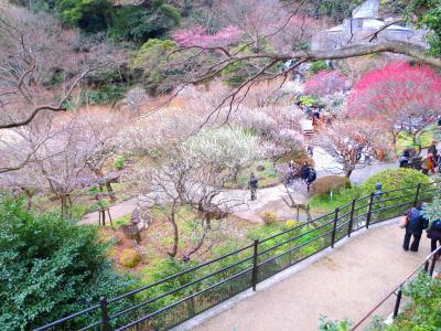 熱海梅園と早咲きの桜並木で人の優しさに触れる