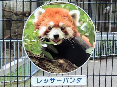 冬のレッサーパンダ紀行【9】江戸川区自然動物園 短時間の訪問で残念ながらブナ君とユウユウさんには会えず・・・ま、こんな日もあるよね・・・