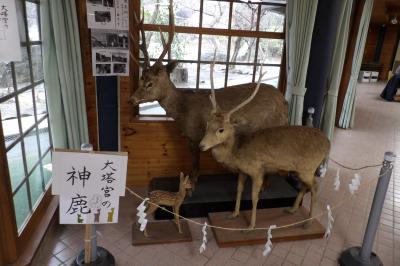 鎌倉宮の神鹿