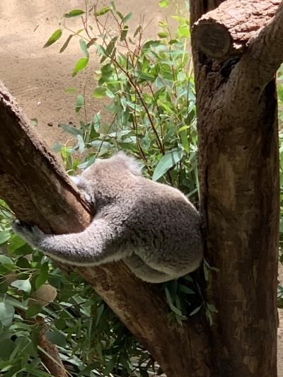 JGC修行①/おひとりさまシドニー~5日目・前編~タロンガ動物園