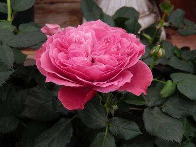 ガーデンセンターで見られた春の花⑭