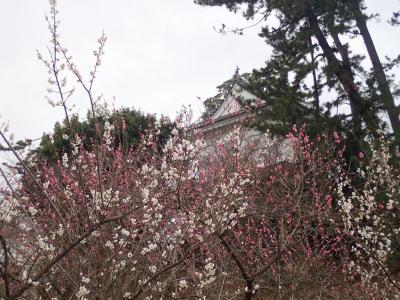 冬の京歩きを切り上げて、小田原散策