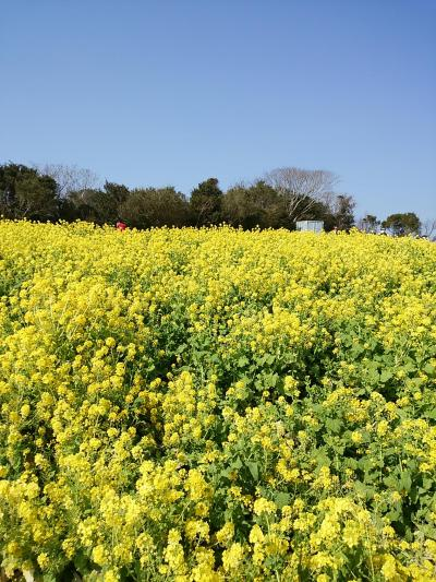 淡路島☆菜の花と淡路島バーガーに泣かされた一日