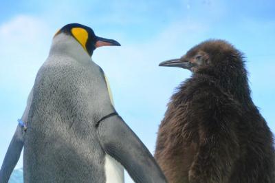 鴨川シーワールドへ行ってきました!かわいい動物がたくさんいて大満足。