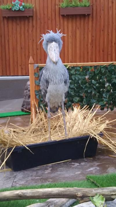 孫と一緒に掛川花鳥園・・・動かない鳥ハシビロコウが大サービスしてくれたよ