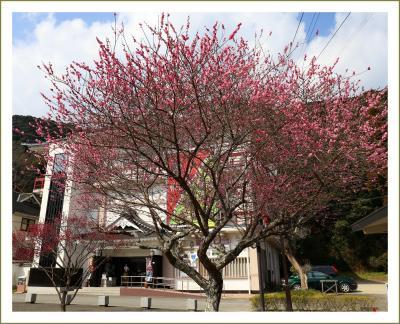 Solitary Journey[1972]ちょいと梅の花を愛でに♪梅の花を観ていると春の足音が聞こえて来るようです。<吉香公園エリア>山口県岩国市