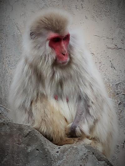 上野動物園-1 ニホンザル・エゾシカ・アジアゾウ ☆旧寛永寺五重塔(重要文化財)も