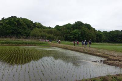 初夏の里山散策会ー千葉県印西市 浦部谷津田の自然と光堂