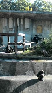 東山動物園と名古屋市博物館 1日目