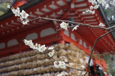 梅の香に誘われて、早春の鎌倉歩き♪報国寺・浄妙寺・瑞泉寺・鎌倉宮・荏柄天神社