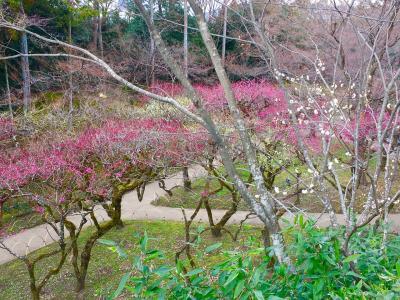 冬の京都(2)北野天満宮、京懐石