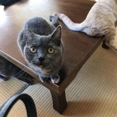 猫好き母娘 猫に惹かれて初真鶴で猫まみれ