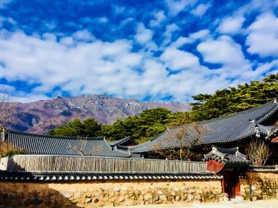韓国   釜山から世界遺産の通度寺へ