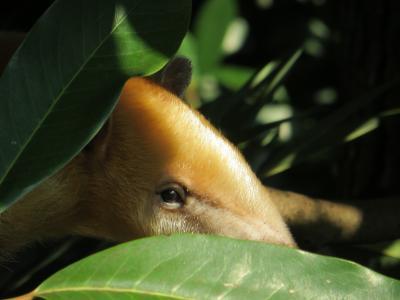 あなた誰? 上野動物園の年パスを更新して新しい発見