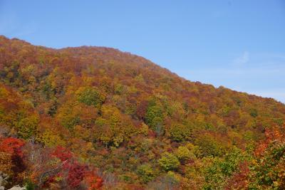 紅葉の鍋倉山へ