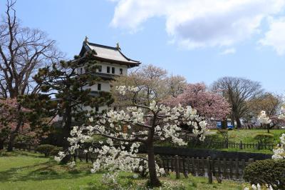 南北海道の桜1 松前
