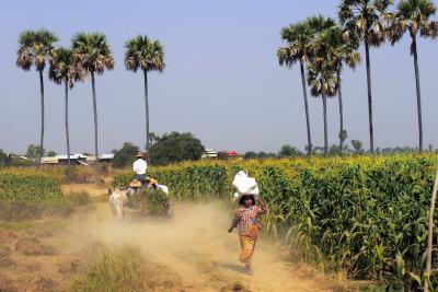 ポン友と二人でミャンマーの旅  バガンでエーヤワディー川対岸の村に…、そしてマンダレーへ