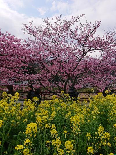 春が来た~。