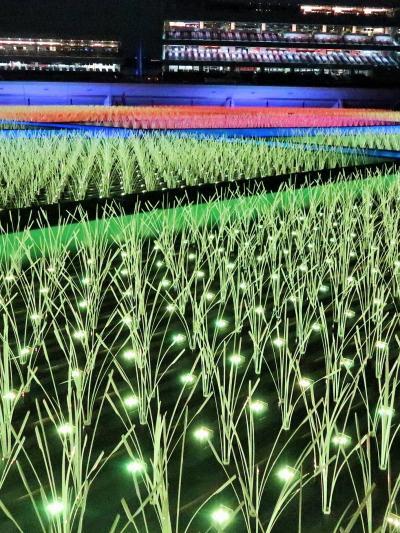 東京 MEGA イルミ-3   江戸期-極彩色-棚田再現 ☆どこか懐かしく/力強く逞しい絶景に