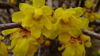 瑞原~東野~荻野地区と歩き、苗圃の花を探してきました 上巻。