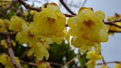 瑞原~東野~荻野地区と歩き、苗圃の花を探してきました 下巻。