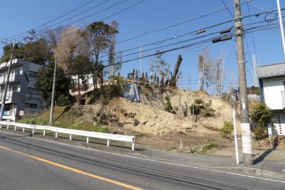 坂本稲荷社の裏山