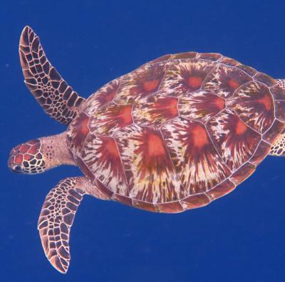 ノンダイバーだって珊瑚礁の海で遊びたいんだってば!シラデン島への旅②