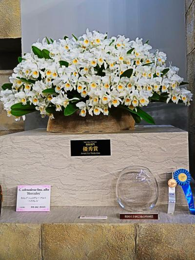 世界らん展-2  優秀賞・優良賞・奨励賞 壇上の逸品 ☆大株に花いっぱい咲かせて