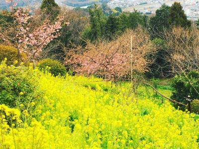河津桜を見て御殿場に宿泊