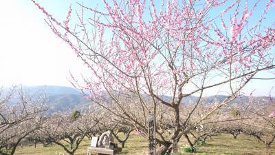 広島☆満汐梅林とラテハートカフェ