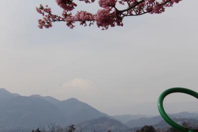 まつだ桜まつり-まつり会場の山頂より