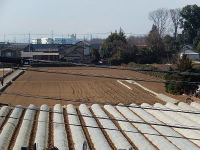 2月24日の富士山