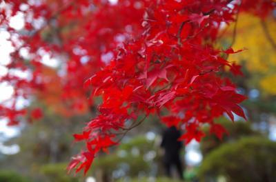 2017年11月 紅葉を見に新潟へ(2日目-2)~弥彦へ