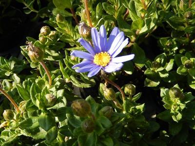ガーデンセンターで見られた春の花⑲