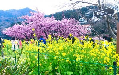 2019 河津桜まつり