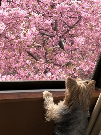 犬と一緒に伊豆に旅行に行きました。4