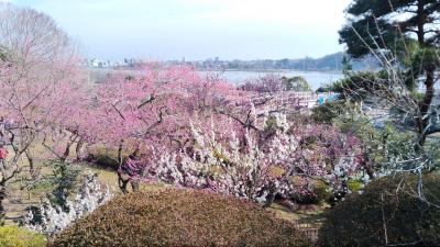 日本三名園の偕楽園で「水戸の梅まつり」