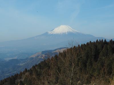 早春の高松山から西平畑公園へ 富士山と満開の河津桜を楽しむ日帰り登山