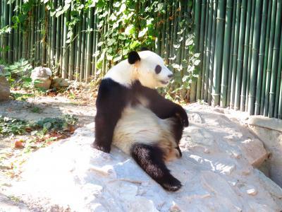 北京動物園!!台風21号で欠航の北京!!2018年8月~9月 中国西安+北京+名古屋 9泊10日1人旅(個人旅行)14