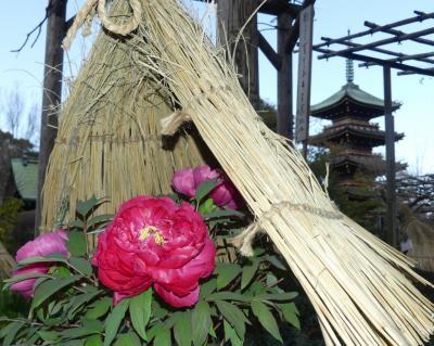 早春の上野公園へ行きました_2019_(2)東照宮の冬ボタン