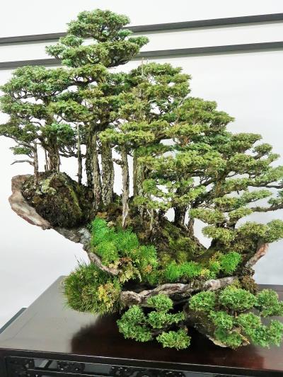 世界らん展13 盆栽の名品 BONSAI-東洋蘭-並存 ☆小宇宙?時空を超えた何か感じて