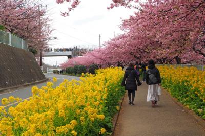 久しぶりの3人旅♪ 三浦海岸桜まつり