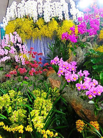 世界らん展16 〔Orchid Heaven-楽園-〕優秀賞-滝の流れも ☆千葉県は洋らん主要産地で