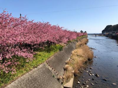 強羅温泉と河津桜の旅