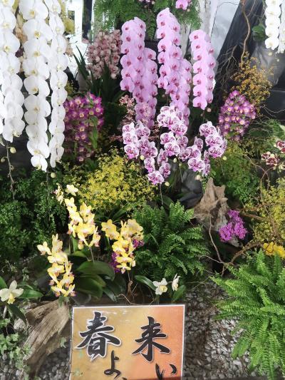世界らん展18 〔春よ、来い〕台湾から-胡蝶蘭の生産多く ☆ディスプレイ部門受賞作品も